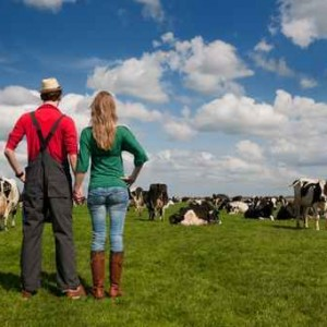 Typical Dutch landscape with farmer couple and cows