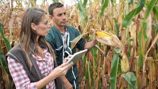 Farmers in cornfield using electronic tablet