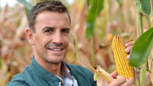Farmer in field checking on corncobs